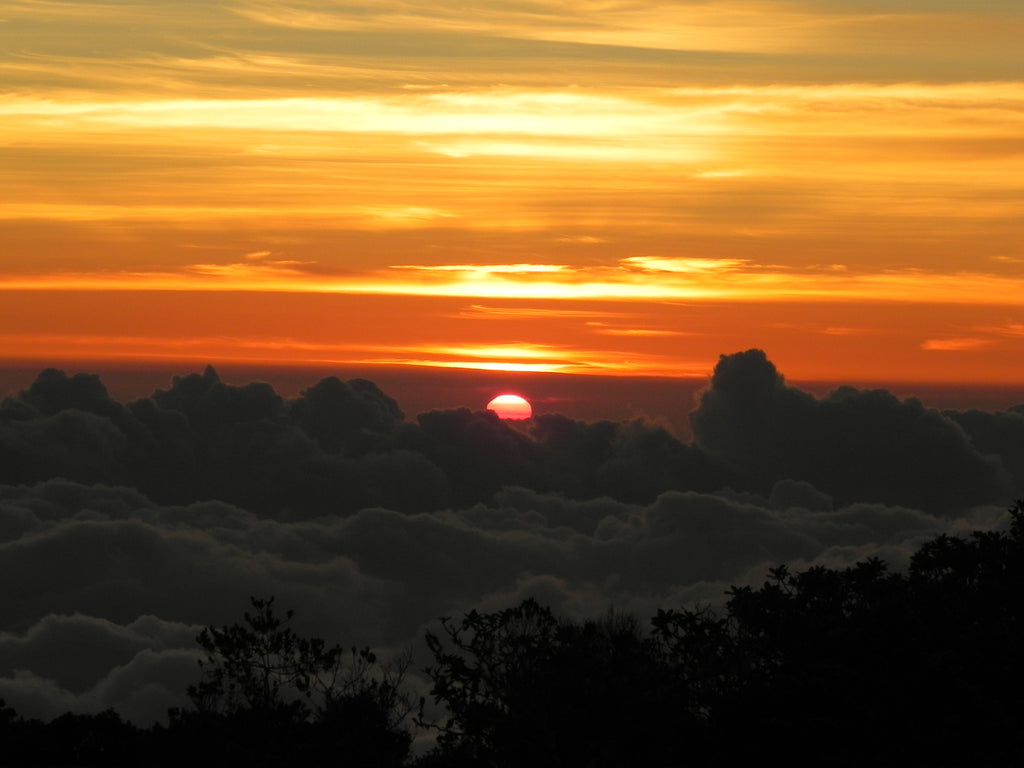 Jamaica – Epic Blue Mountain Peak Sunrise Hike