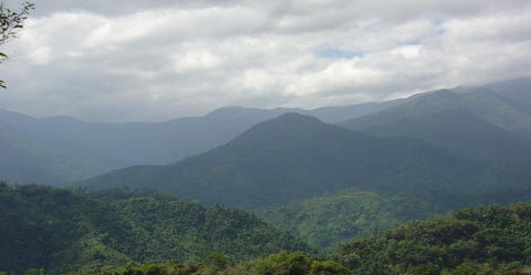 Jamaica's Blue Mountains
