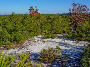 Florida's Ocala National Forest - Scrub Forest - Urban Canairie