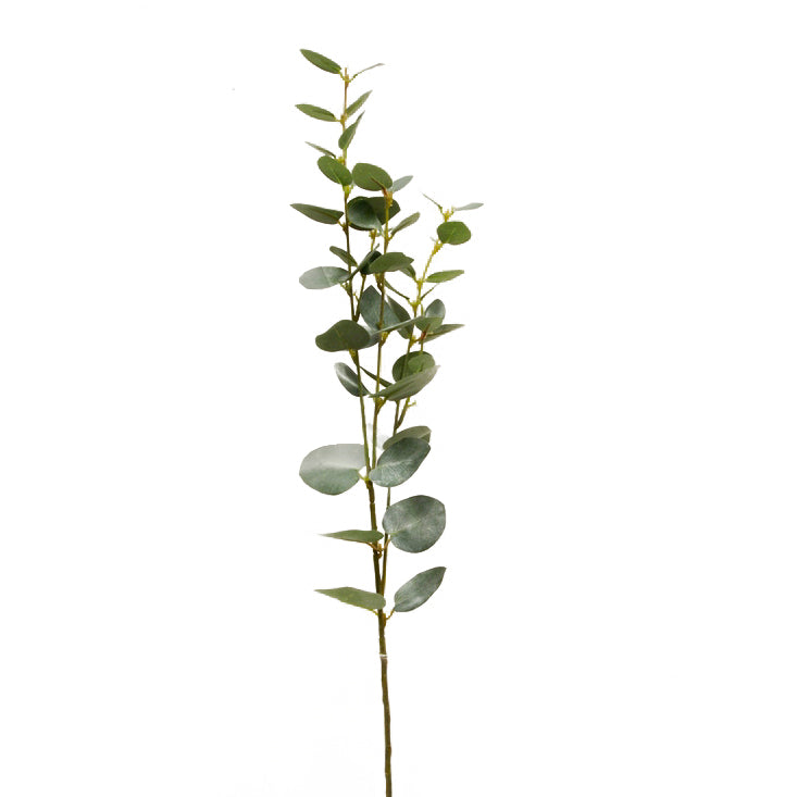 Eucalyptus Stem - Green