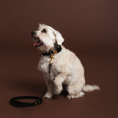 Leather Dog Collar - Sable