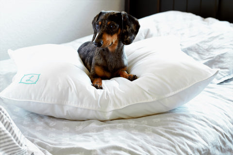 Dog on L Pillow