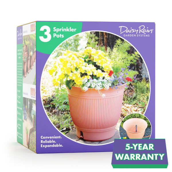 Daisy Rain Three Pot Kit
