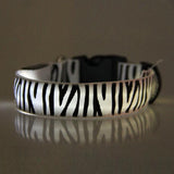 LED Dog Collar w/ Zebra Pattern