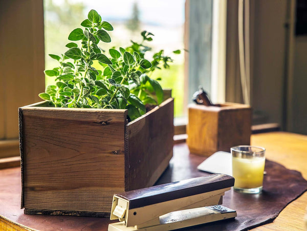 Rustic Antique Herb Box