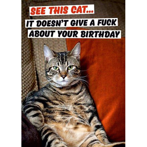 See This Cat Greeting Card