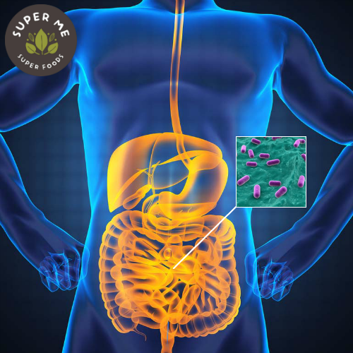 Probiotics – Essential For Gut Health, Immunity And Overall Wellness