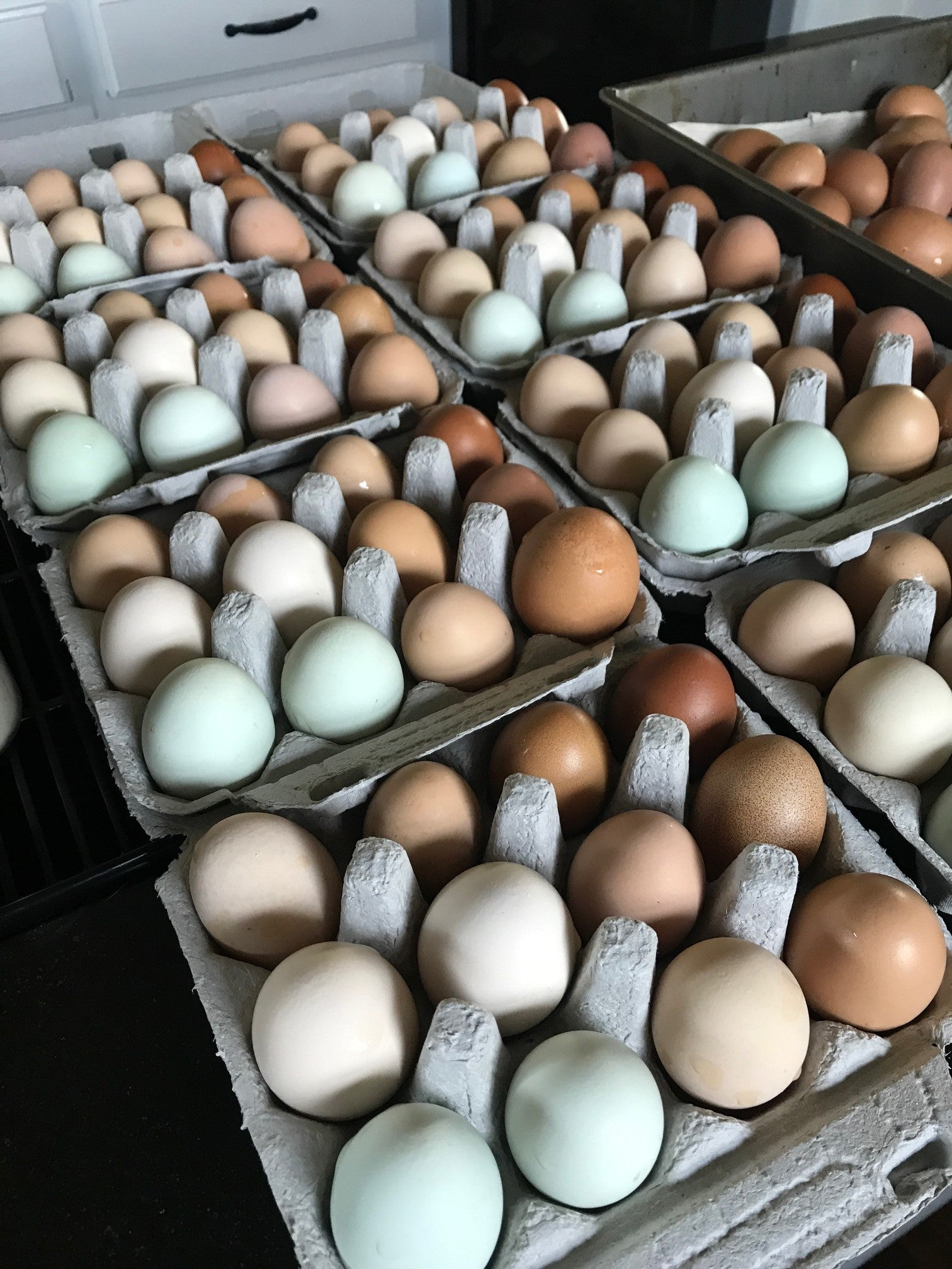 pastured eggs rainbow eggs dfw