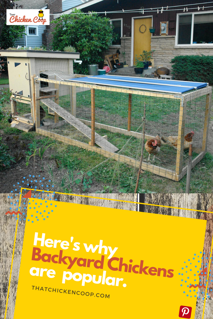 Raising Backyard Chickens 101 - This Movement Is No Yolk