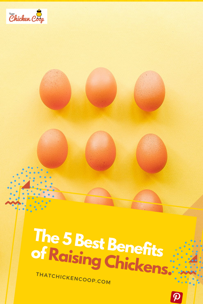 5 Benefits Of Keeping Chickens