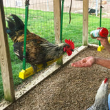 The Chicken Swing by Fowl Play Products - That Chicken Coop