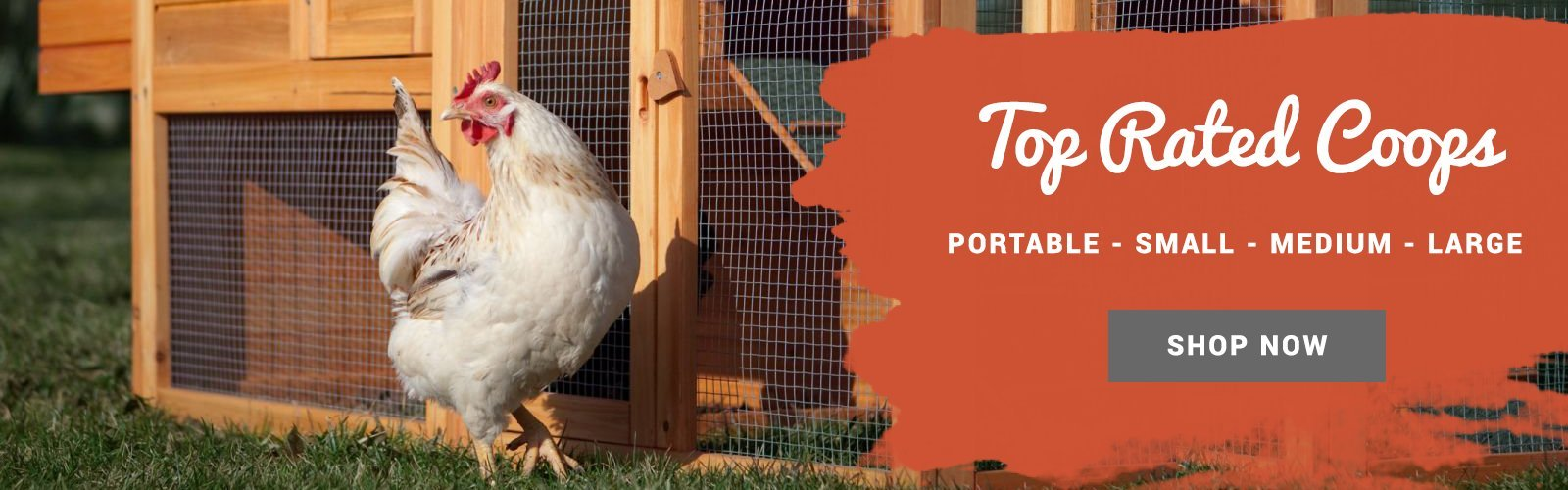 Top Rated Backyard Chicken Coops