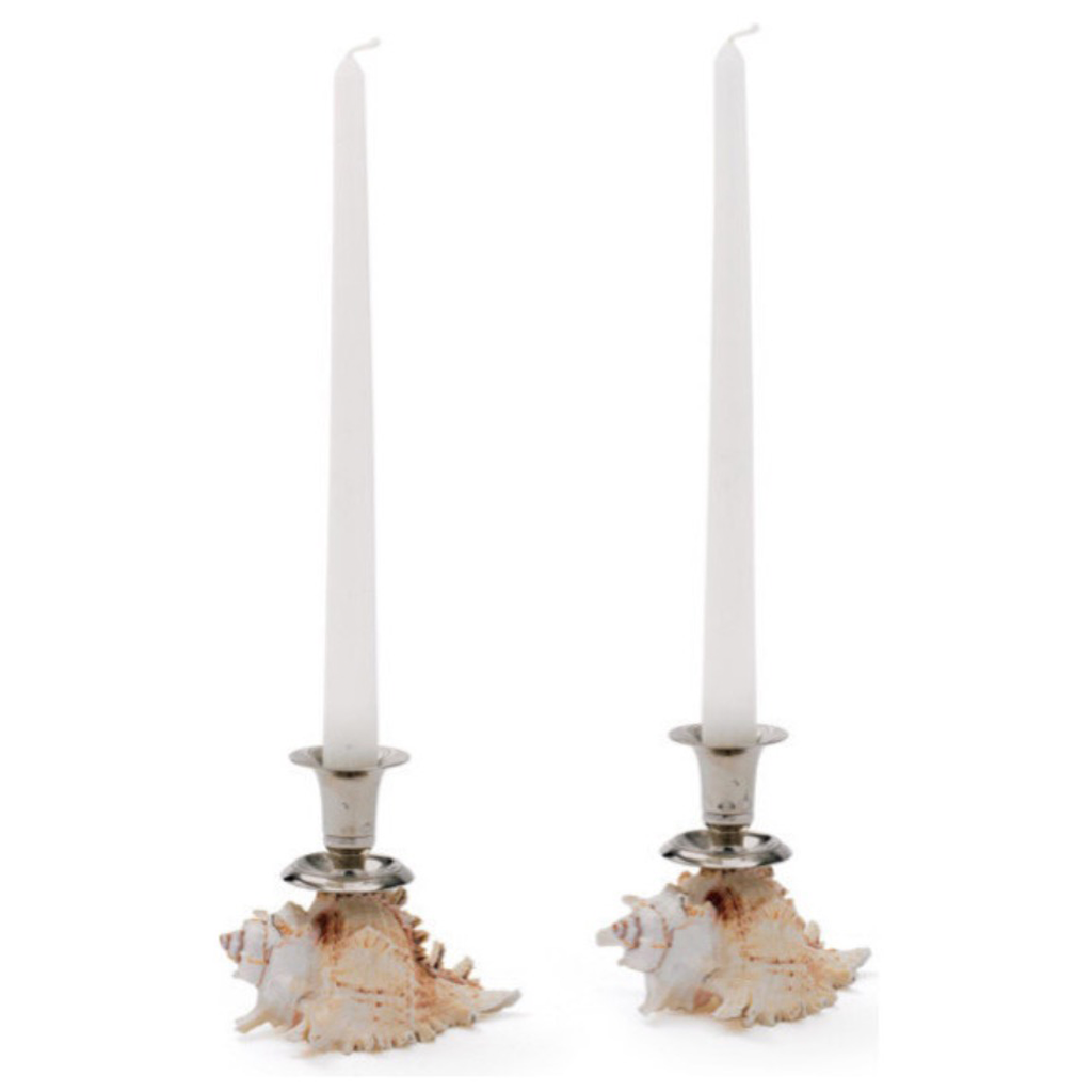 Shell Candlestick Holders