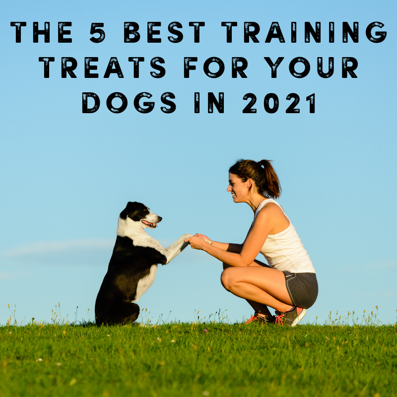 The 5 Best Training Treats For Your Dogs in 2021