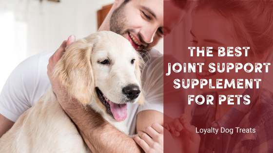 The Best Joint Support Supplement for Pets