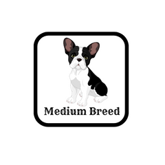 medium breed