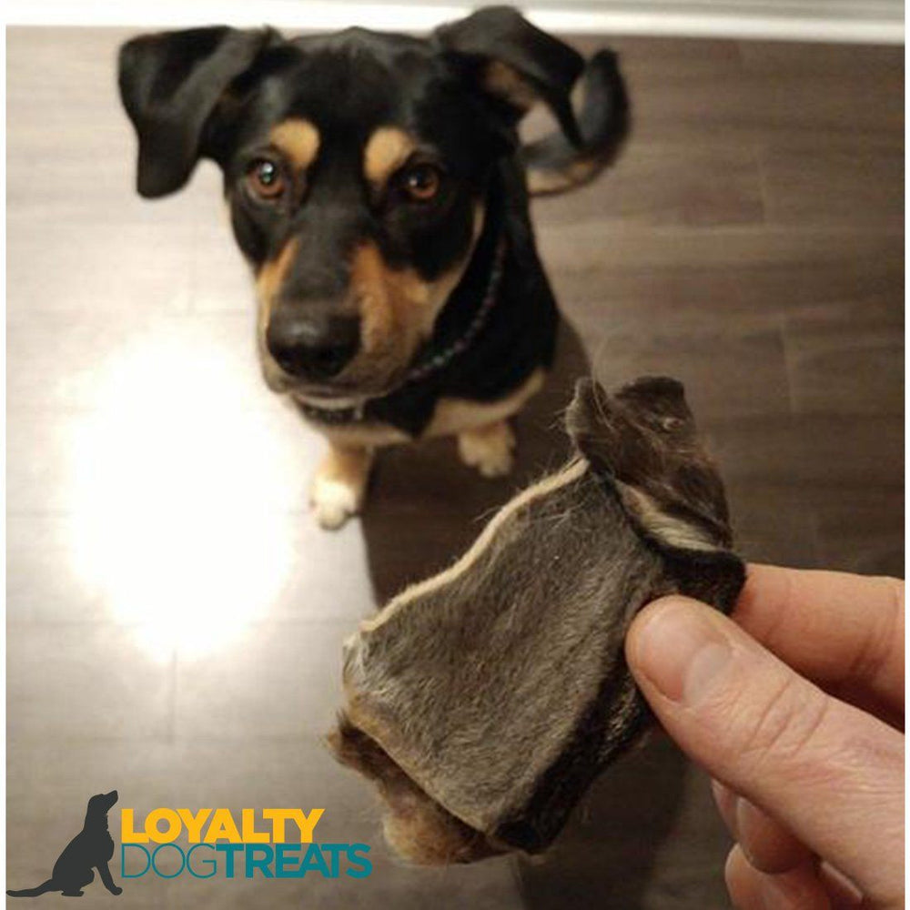 rabbit ears - Loyalty Dog Treats