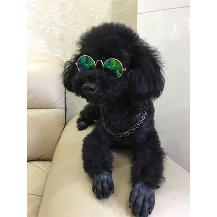 Hot Sale Glasses For Pet Products Eye-wear