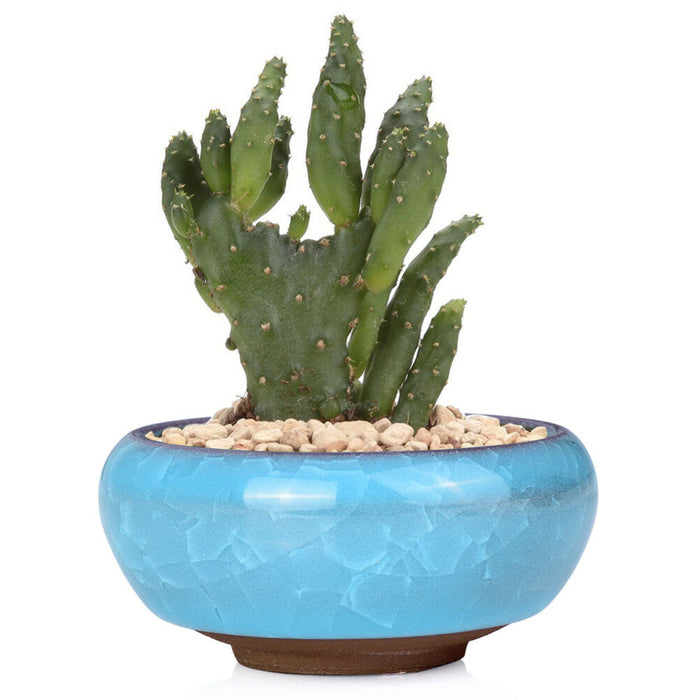 Chinese Glazed Ceramic Style for Succulent Planter Decors