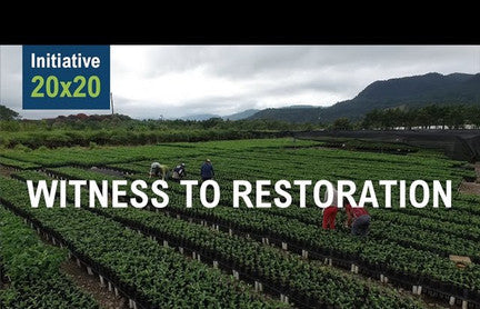 20x20 Initiative: Restoring 20M hectares of land by 2020