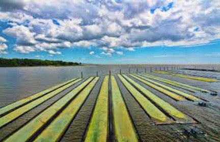 Algae Systems: Using algae to clean our dirty water in a carbon neutral way