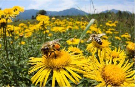 Bee Buffer Project: Protecting the honeybees that pollinate and produce