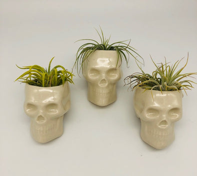 Jenny Blicharz Ceramic Skull Planter