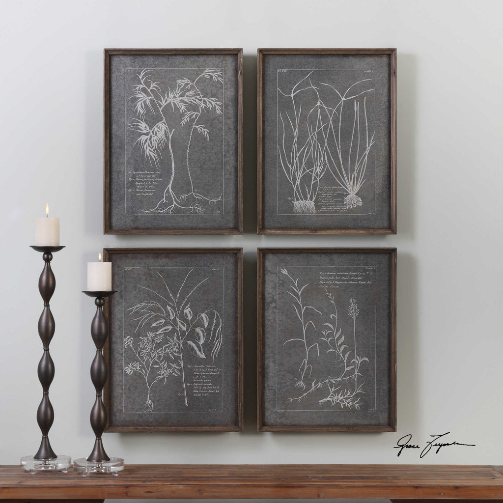 Root Study Framed Prints - Set of 4 - The Hive Experience