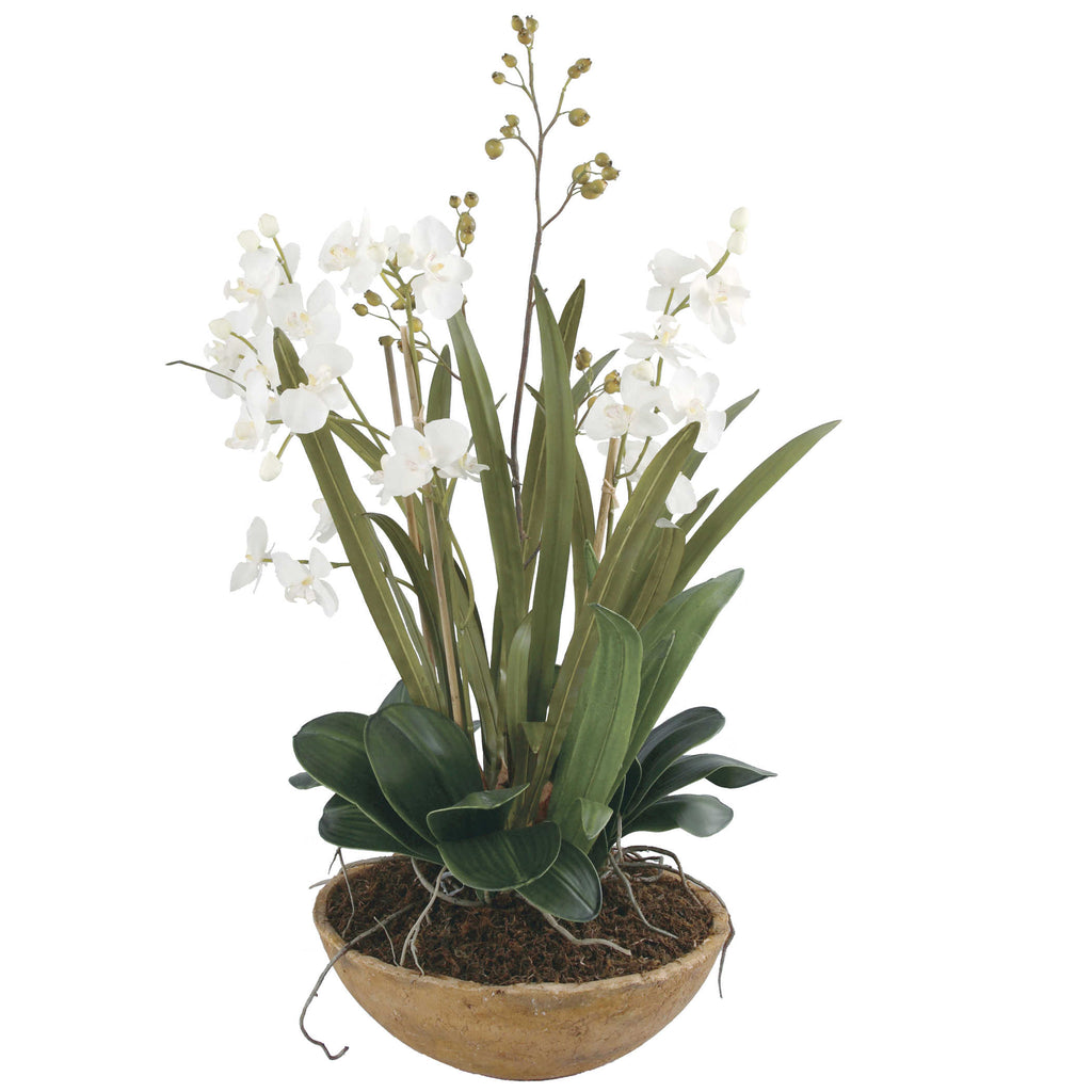 Moth Orchid Planter - The Hive Experience