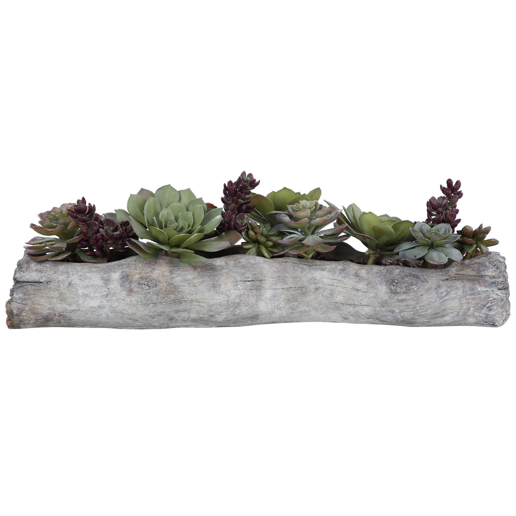 Charita Succulents - The Hive Experience