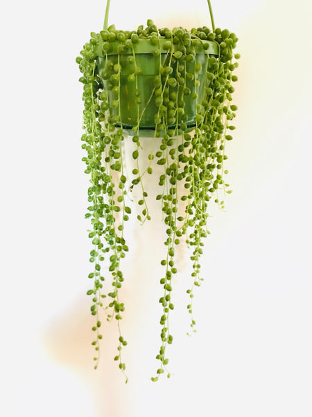 The Fabulous String of Pearls