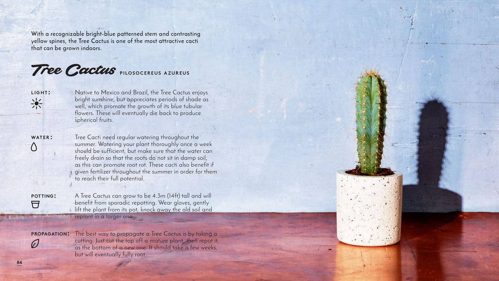 The Little Book of Cacti and Other Succulents - New Book