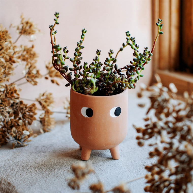 Little Leggy Terracotta Plant Pot