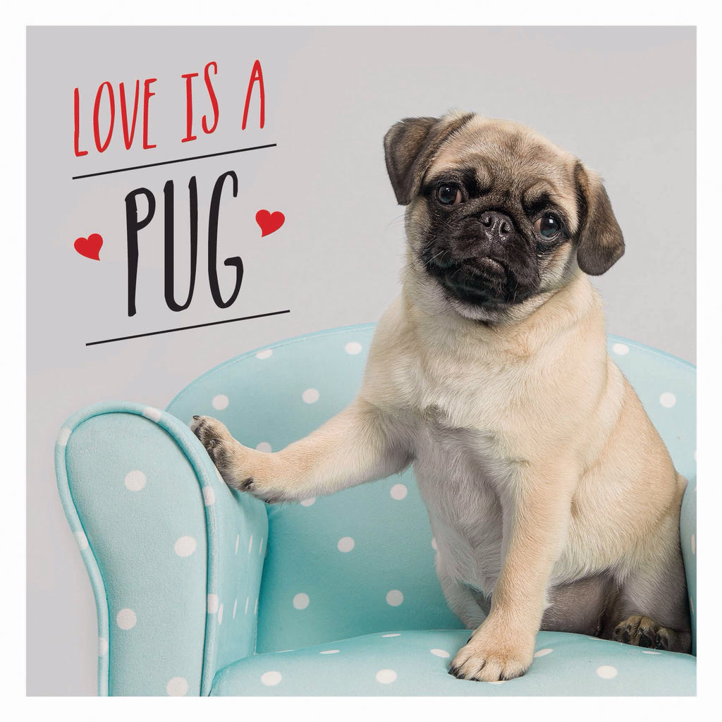 Love Is A Pug - New Book