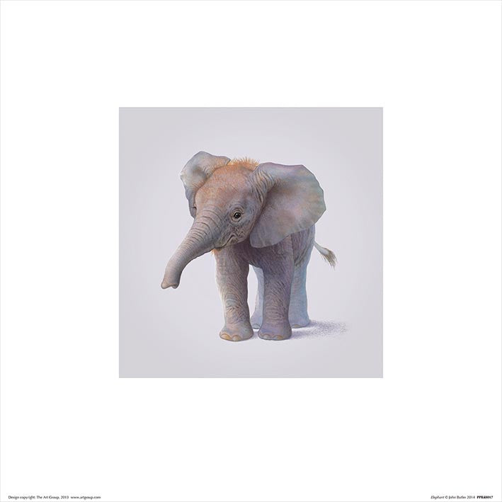 Baby Animal Art Print Elephant - 30 x 30cm