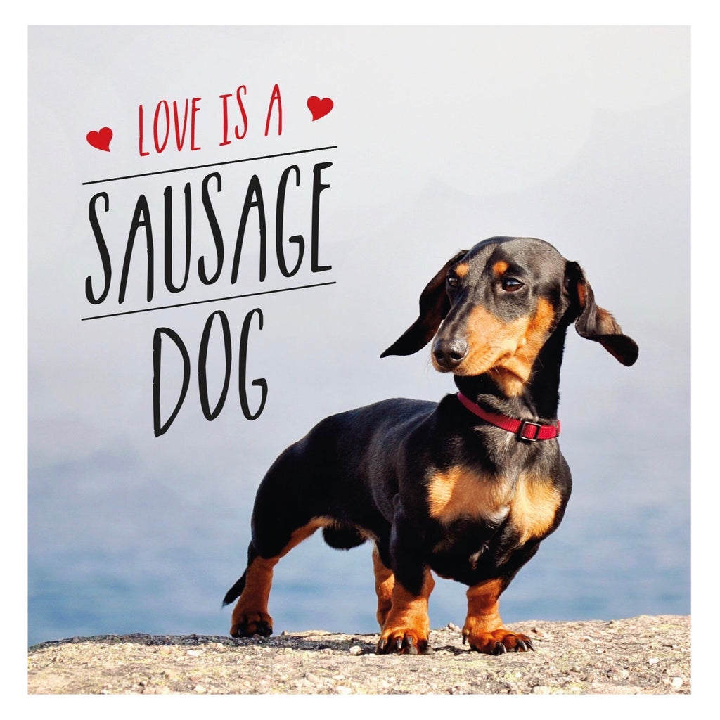 Love Is A Sausage Dog - New Book