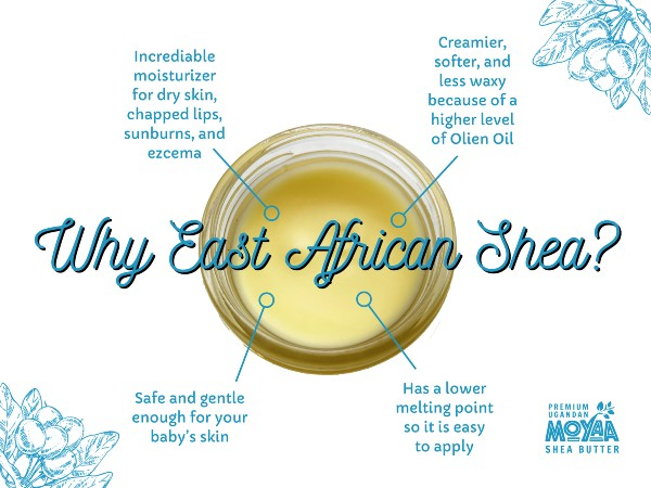 The Benefits of Shea Butter and Aloe Vera