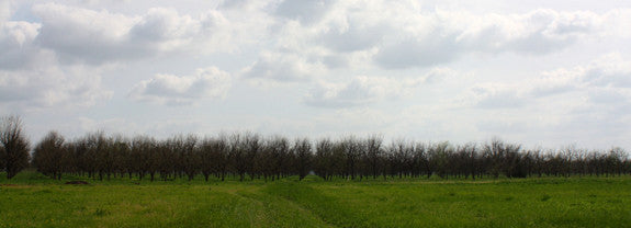 In the Pecan Orchard: April 2014
