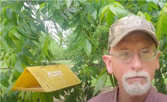 Andy shows a pest trap in the orchard