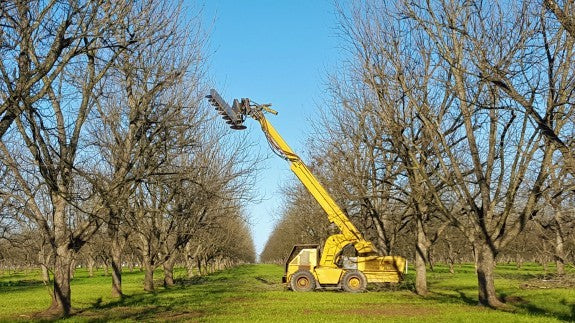 Royalty Pecan Farms - Tree hedger at work