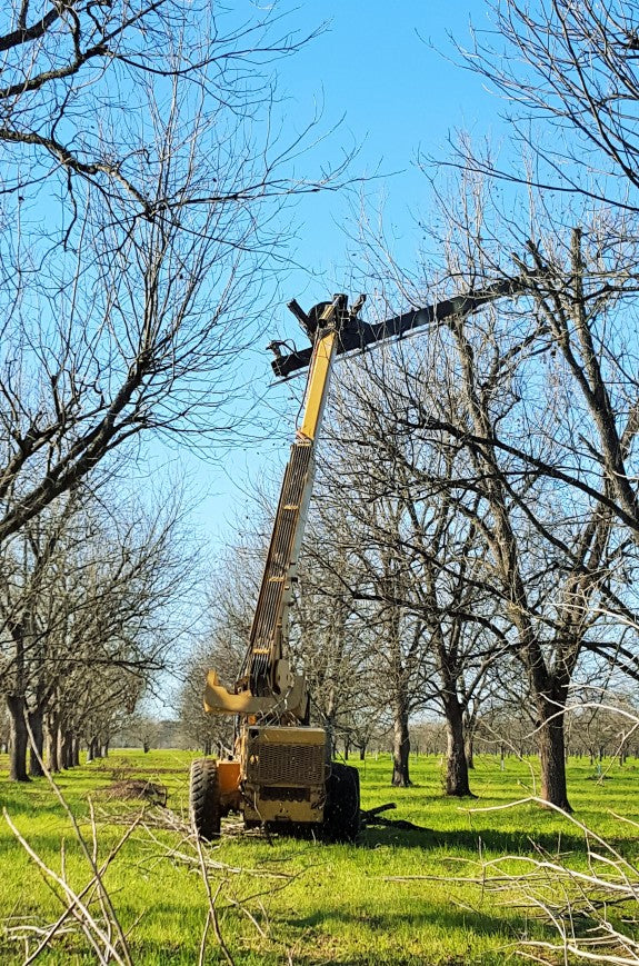 Royalty Pecan Farms - Tree hedger at work in February