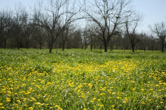 Royalty Pecan Farms Wildflowers in the Orchard