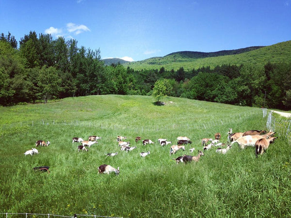 adaptive grazing goats