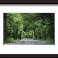 Fitzgerald Glade Photographic Print