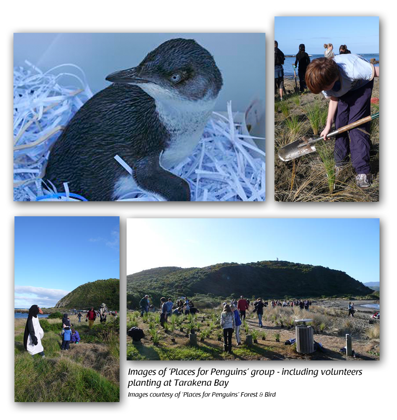 Little Blue Penguin Conservation