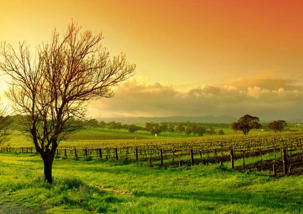 Barossa Valley - Where Wine Tastes Better