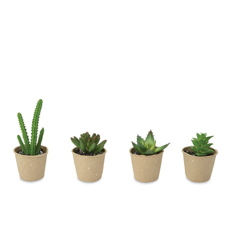 SUCCULENT PLANT IN POT AST