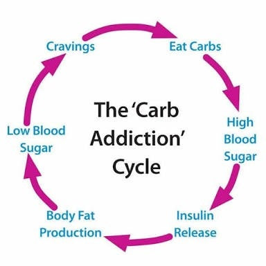 carbohydrate cycle