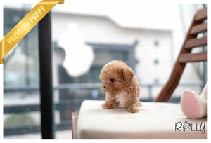 (PURCHASED by Lee) OTTO - Poodle. M - ROLLY PUPS INC