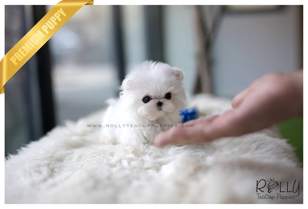 (RESERVED to Hong) Ace - Maltese. M